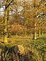 Woodland adjacent to Rutland Water - geograph.org.uk - 1067464.jpg