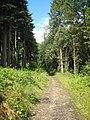 Woodland path in Bishop's Wood - geograph.org.uk - 912741.jpg