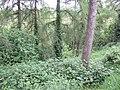 Woods by the Boyne - geograph.org.uk - 455551.jpg