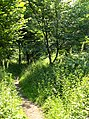 Wreay Woods - geograph.org.uk - 196329.jpg
