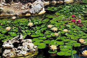English: Isamu Taniguchi Japanese Garden