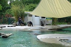 Augsburg Zoo - Image: Zoo Augsburg, Südafrikanische Seebären