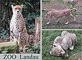 Zoo Landau - panoramio (8).jpg