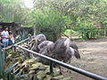 Zoológico de Cali 39.JPG