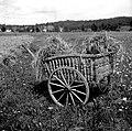 """Košula"" (kršula) na polju z Zadloga 1959.jpg"