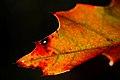 (347-365) Autumn (6258522757).jpg