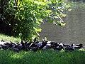 Łódź, park im. Reymonta, poł. XIX -4.JPG