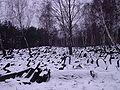Żydowski cmentarz na Bródnie 02 2007 1.JPG