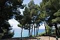Χαλκιδική, Σιθωνία, Ελιά - panoramio (14).jpg