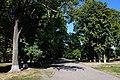 Алея навпроти центрального входу до парку-пам'ятки «Антонінський».jpg