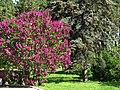 Ботанічний сад ім. М.Гришка IMG 9019.jpg