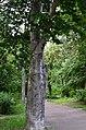 Восточная часть парка Нивки. Фото 36.jpg