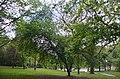 Горіх Чорний. Гунські криниці. Фото 2.jpg