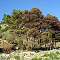 Дороги в Эриче, Сицилия - panoramio.jpg