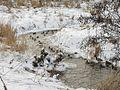 Зима на реке Уша. Winter on the river Usha. - panoramio.jpg
