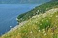 Квіти на схилах Білої гори над Бакотою.jpg