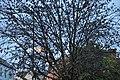 Кембридж - panoramio - Андрей Бобровский (8).jpg