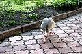 Київський зоопарк Гуска атакує 06.JPG
