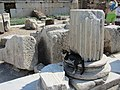 Кошка и обломки колонн около одеона. Эфес. Турция. 2012. Сельчук. Турция. Июнь 2012 - panoramio.jpg
