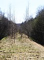 Латвия Насыпь железной дороги Рига - Лимбажи - panoramio.jpg
