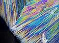 Микро кристаллы в поляризованном свете. Лимонная кислота.jpg