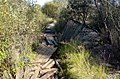 Мостки через болото - panoramio.jpg