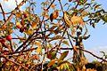 Осень на Мамайке (18).JPG