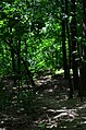 Парк Берёзовая роща в Киеве. Фото 33.jpg