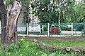 Ствол дуба и отломанная часть дуба на улице Коминтерна.jpg