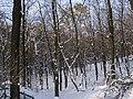 Украина, Киев - Голосеевский лес 22.jpg
