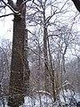 Чернечий Ліс 15.jpg