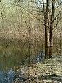 Чернігів. Міський сад. Весняна вода..JPG