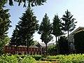 Янів - Замок-палац Холонєвських DSCF0618.JPG