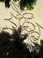 צילום ציור קיר ע סלע.jpg