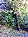 جاده خوش ییلاق - panoramio.jpg