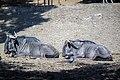 حیوانات باغ وحش مرکزی شهر تفلیس پایتخت گرجستان 24.jpg