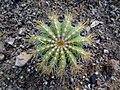 گلخانه کاکتوس دنیای خار در قم. کلکسیون انواع کاکتوس 04.jpg