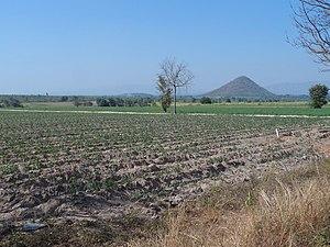 Lao Khwan District - Cassava fields near Ban Khao Wang, Lao Khwan District, in January, during Thailand's dry season