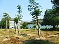 兴宁河西村磐安围20121004 - panoramio (6).jpg