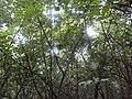 原生态森林中的鸟窝 - panoramio.jpg