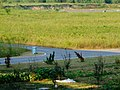未央 机场线渭河旁的小路.jpg
