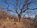 桃源仙谷北回路 - North Trail of Taoyuan Fairy Valley - 2012.03 - panoramio.jpg