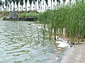 湖边 - panoramio (1).jpg