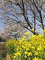 蔓巻公園付近 2016年04月 - panoramio.jpg