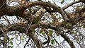 ... complex art of nature (312704168).jpg