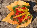 . Die Natur spricht mit Dir. Das Rebenblatt im Herbst will Dir etwas mitteilen und Dich erfreuen.jpg