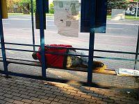 00635 Schlafender Mann auf einer Bank an einer Bushaltestelle in Sanok (2012)