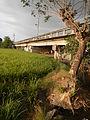 03910jfPaddy fields village Baliuag Bulacan Candaba Pampanga Bridge Roadfvf 12.JPG