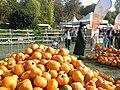 1. Bucharest, Romania. Pumpkin Fest. Primul Festival de Halloween din Romania. Oct. 2019. (Frumoasa vrajitoare negociaza cu copilul).jpg