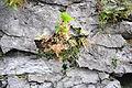 12-11-01-hallein-baudenkmal-by-RalfR-226.jpg